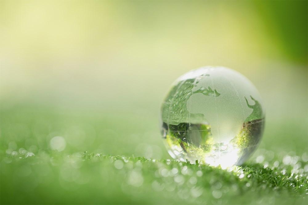Doğadan Alınan İlham: Biyomimikri