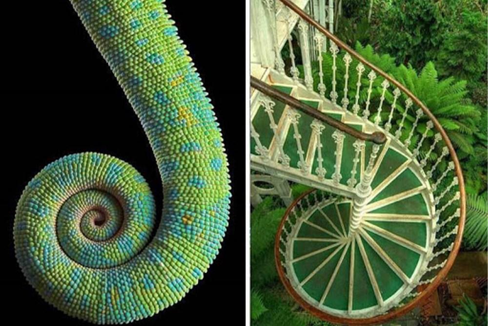 Mimarlıkta Doğadan Öğrenme Paradigması