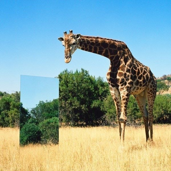 Ecological Mirror - 0