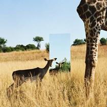 Ekolojik Ayna