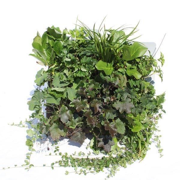 Yeşil Duvar Sistemleri/Flexipanel