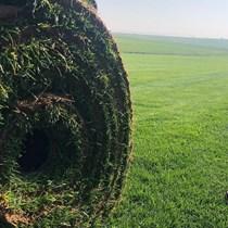 Hazır Doğal Rulo Çim | Büyük Rulo Çim