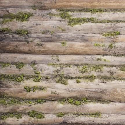 Innovative Design | Baobab Moss