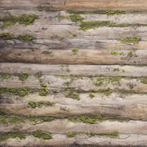 Yenilikçi Tasarım | Baobab Moss