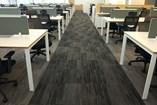Carpet Tile | Woodbine - 13